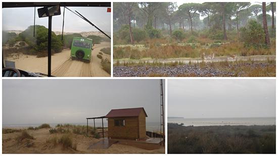 imagen parque Doñana