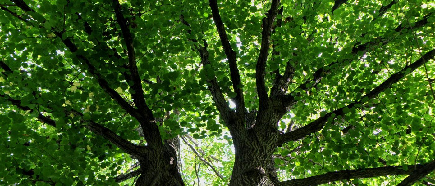 El cambio climático será el tema eTwinning para 2020